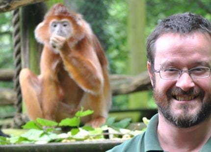 Animal Manager, Simon Jeffery with Javan langurs at Port Lympne Hotel & Reserve in Kent