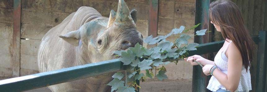 Rhino encounter at Port Lympne Hotel & Reserve in Kent