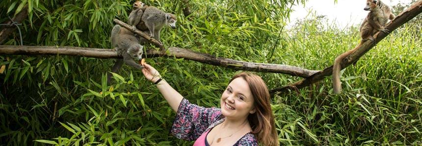 Lemur encounter at Howletts Wild Animal Park, near Canterbury in Kent