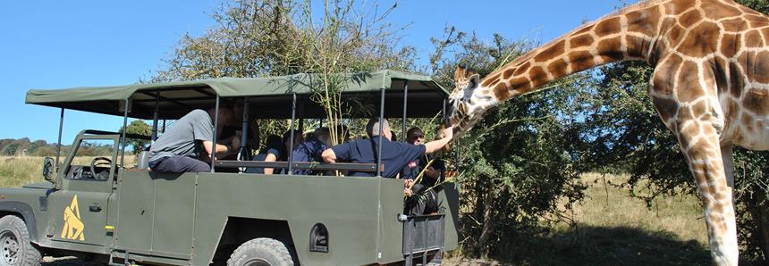 Get up close to giraffes on a VIP safari experience at Port Lympne Hotel & Reserve in Kent