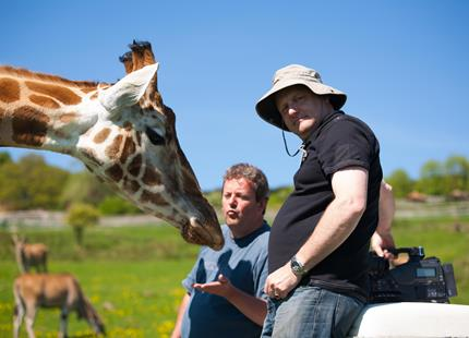 Film crew on location with giraffes at Port Lympne Hotel & Reserve in Kent