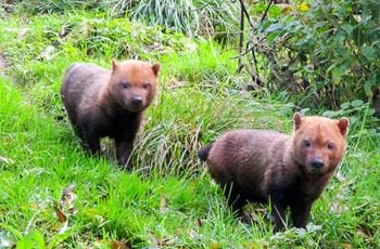 The Bush Dogs