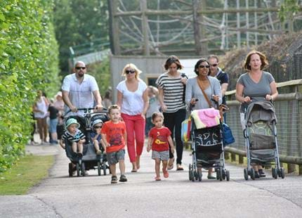 Groups of 15 or more enjoy discounted entry at Howletts