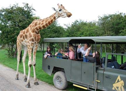 Giraffe Safari at Port Lympne Hotel & Reserve in Kent