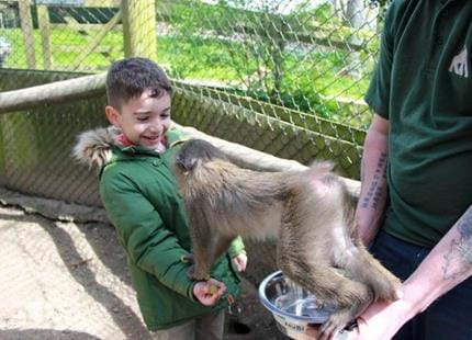 Feed monkeys on an animal encounter at Port Lympne Hotel & Reserve in Kent