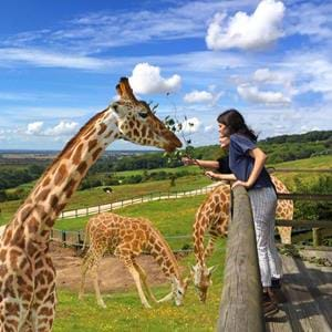 Giraffe Lodge at Port Lympne Reserve in Kent