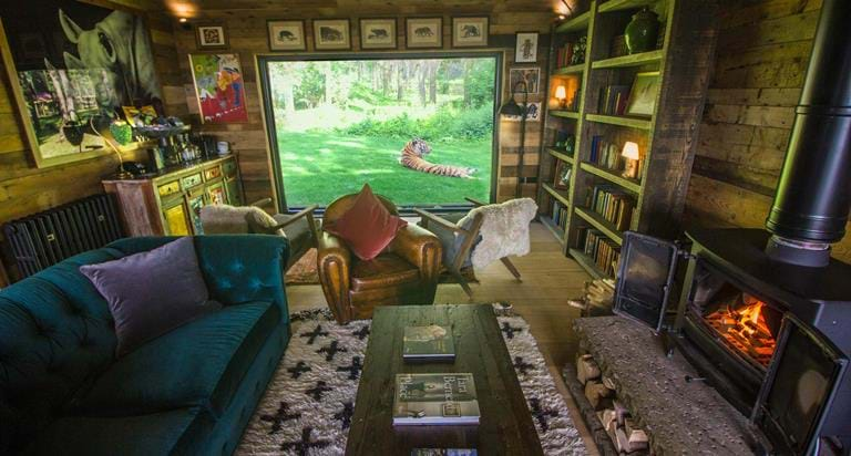 Step Inside A Tiger S World At Lodge In Kent