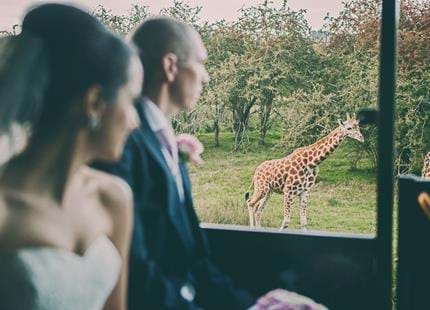 Wedding safari at Port Lympne Hotel & Reserve in Kent