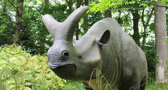 Howletts Wildlife Park & Conservation Charity In Kent | The