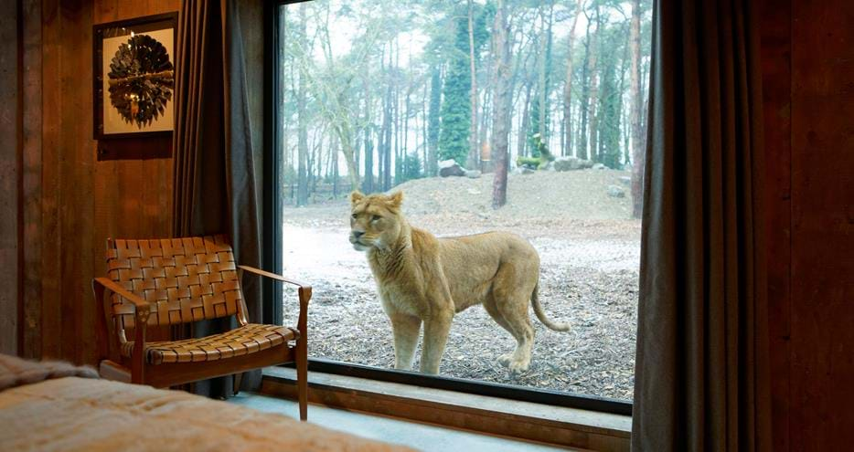 Lion Lodge Short Breaks Sleep Next To The Lions The Aspinall Foundation